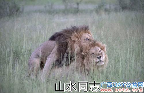 动物之间也会有同性恋吗?