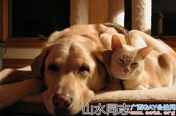 为什么gay都喜欢养猫狗?养猫和养狗的主人特质大对比