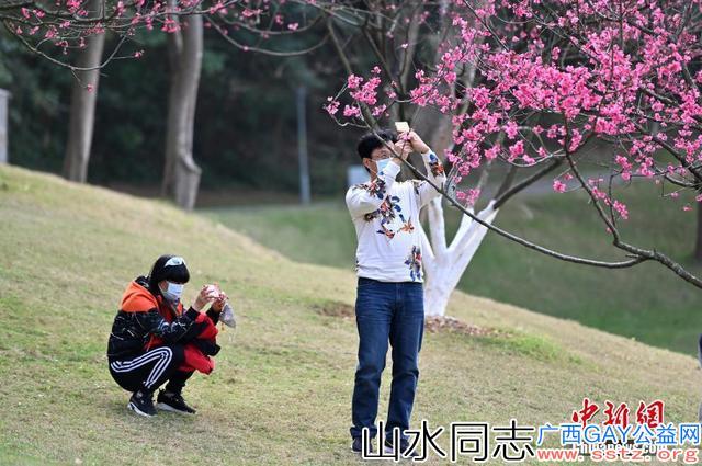 广西南宁樱花盛放 市民戴口罩观赏