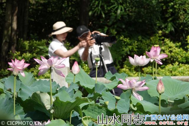 南宁第二届竹荷文化节正式开幕